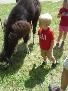 checking out a llama