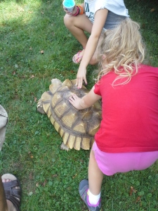 petting the tortoise