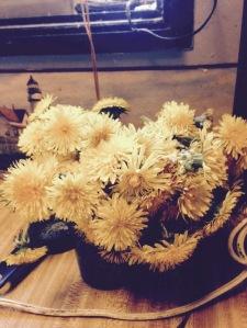 Dandelion season again