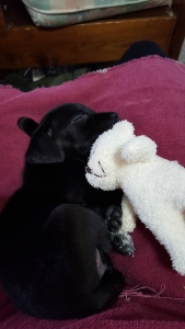 He likes to snuggle with his bear...after trying to rip its arm off.