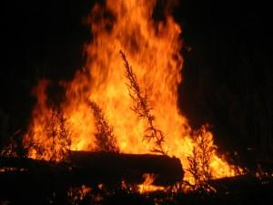 fire-1559717-640x480