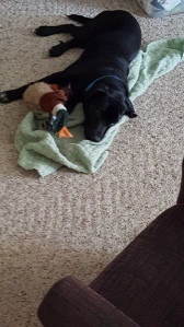 He's got his blankie and duck? What else does a pup need?