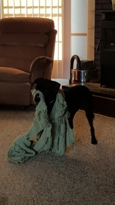 Mr. Destructive Puppy...or what happens when you chew up your blanket
