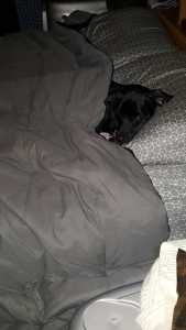 My lazy puppy has his priorities straight on a cold, rainy morning