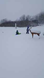Playing in all the snow we got over the weekend.